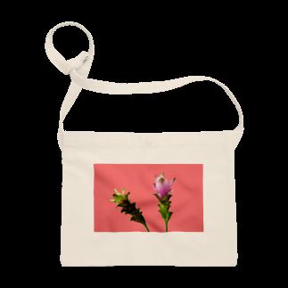 CALAKUEN(SOIL)のCurcuma alismatifolia -pink Sacoches