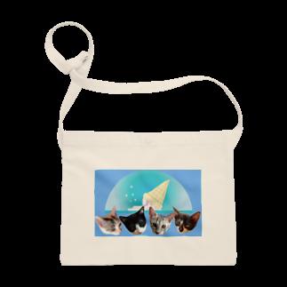 保護猫カフェ「駒猫」さん家のNo.7 フルーツ4兄弟♪ Sacoches