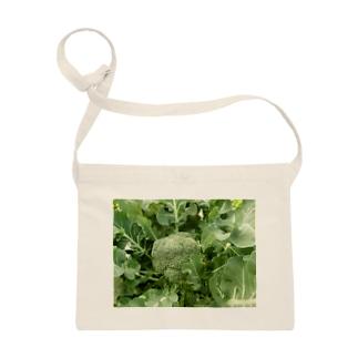 日本の野菜:ブロッコリー Broccoli Sacoches