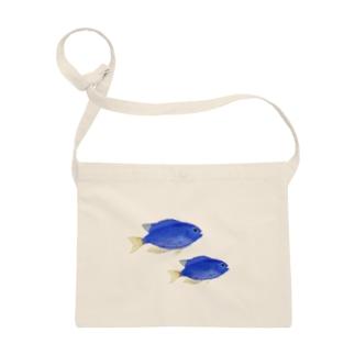 青い魚のソラスズメダイ Sacoches