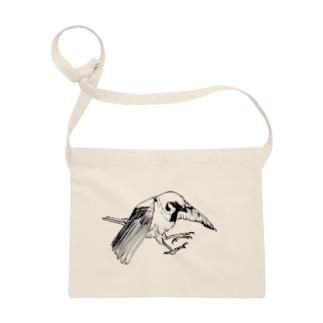 tree sparrow Sacoches
