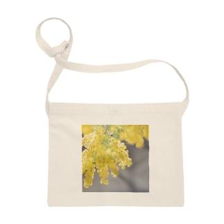mimosa Sacoche