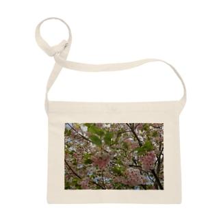 日本の春 桜A Sacoches