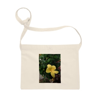 黄の仏桑花 Sacoches