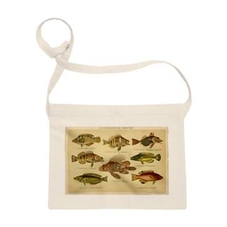 魚 <アンティーク・イラスト> Sacoches