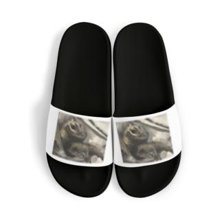tashiroriekoホカケトカゲ Sandal
