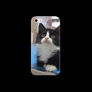 保護猫カフェにゃんずの保護猫ぽんちゃん Smartphone cases
