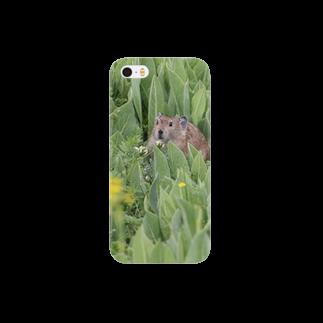 ゆきうさぎ工房のナキウサギinメタカラコウ Smartphone cases