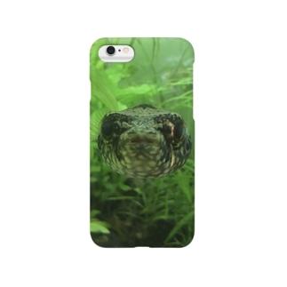 水族館のフグ(正面) Smartphone cases