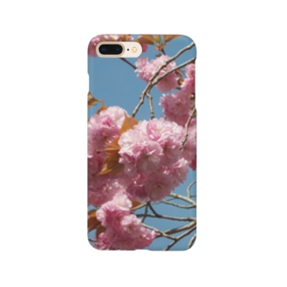 Cherry blossoms are close to Hanyu's monument 可憐な桜 Smartphone cases