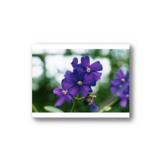 ヴァイオレットが咲いている Stickers