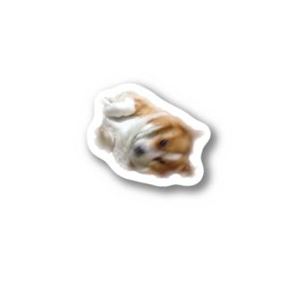FUNKY  DOG Stickers