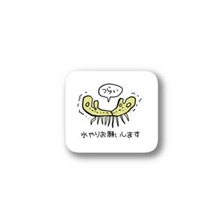 枯れてるゼニゴケちゃん Stickers