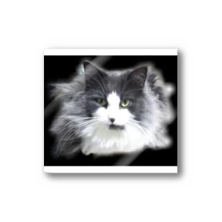 堕天使な長毛猫 Stickers