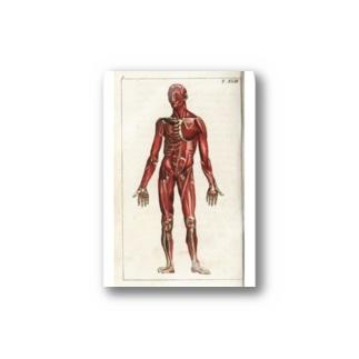 人体生理学 Stickers