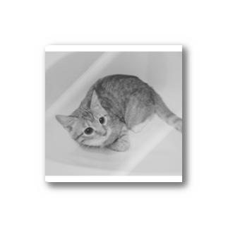 モノクロ猫 Stickers