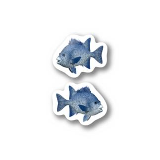 イシガキダイ_1_ST Stickers
