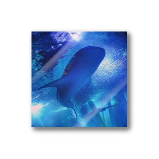 Whale shark Stickers
