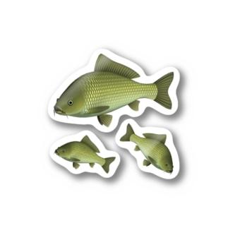 コイ_2_ST Stickers