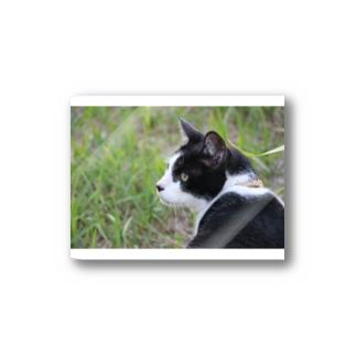 猫 Stickers