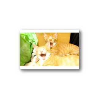 猫2 Stickers