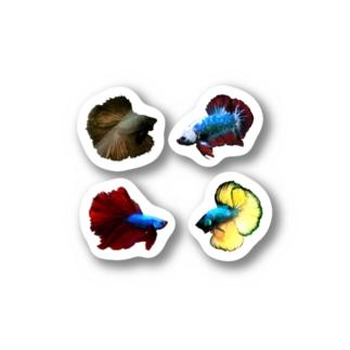 ショーベタ ステッカー Stickers