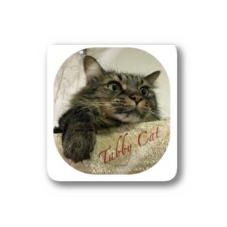 Tabby Cat Stickers