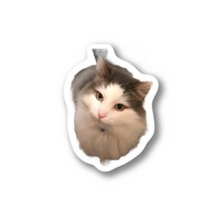 カイくん Stickers