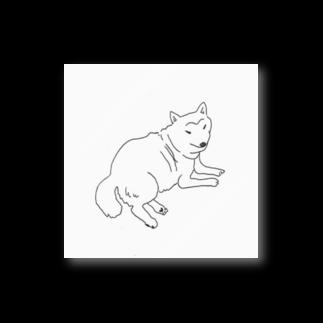 mnuのこっちをみている柴犬 Stickers