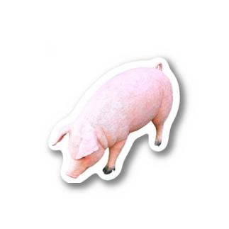 豚 Stickers