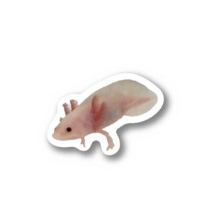 ぷっぷちゃんステッカー Stickers