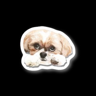 ぽんず店長のLovelyシーズー犬グッズの上目づかいシーズー犬かぼすステッカー Stickers