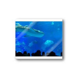 ジンベイザメの写真 Stickers