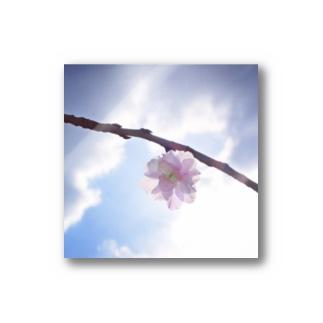 桃の枝 Stickers