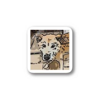 【保護犬/迷子犬】タロちゃん Stickers