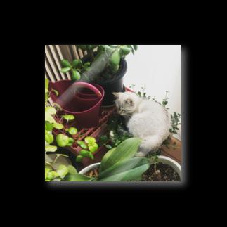 SHOP_KAGENEKOの観葉植物ぶっ潰し猫 Stickers