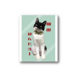 梅田ぽんたろーステッカー猫 Stickers
