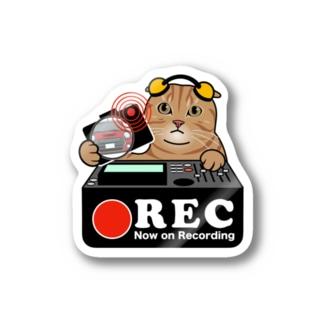 スコティッシュフォールド ネコ 猫 ドラレコステッカー Stickers