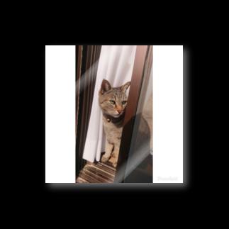 キジトラ猫ミミの愛猫ミミさん Stickers