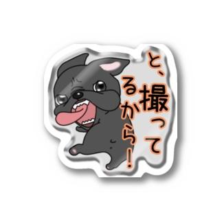 まるっとフレブル_ステッカー(撮ってる)  Stickers