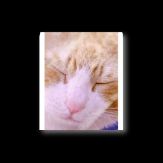 昭和~平成~令和系のりさぴん@の保護猫 セサミくん Stickers