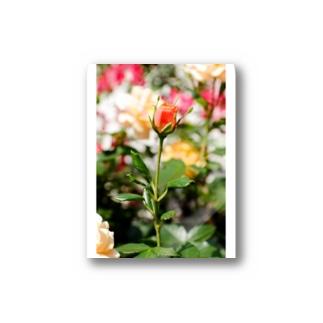 FLOWERS-蕾- Stickers