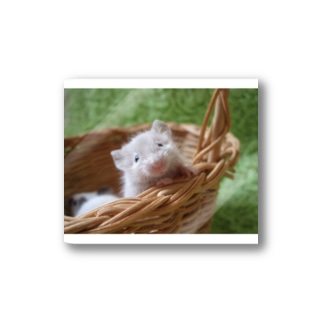 ひょっこりマウス Stickers