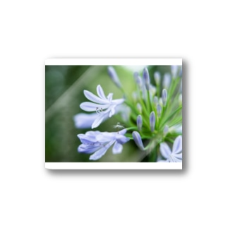 Angel of Agapanthus 170702 Stickers