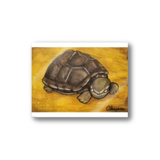 亀のおくやす君✖︎すわみずほ Stickers