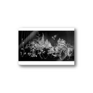 植物学 Stickers