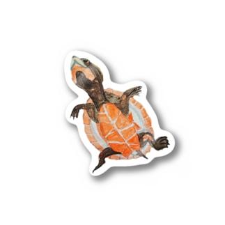 ニシキマゲクビガメ Stickers