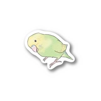 首傾げ スパングルセキセイインコちゃん【まめるりはことり】 Stickers