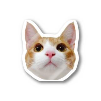 アイプチ猫みたらしカラー -壱- ステッカー