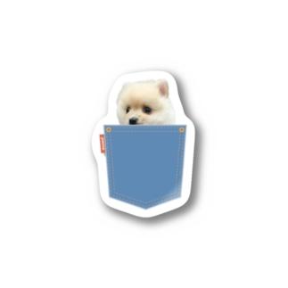 ポメラニアンのポメくんのポメラニアンのポメくん Sticker